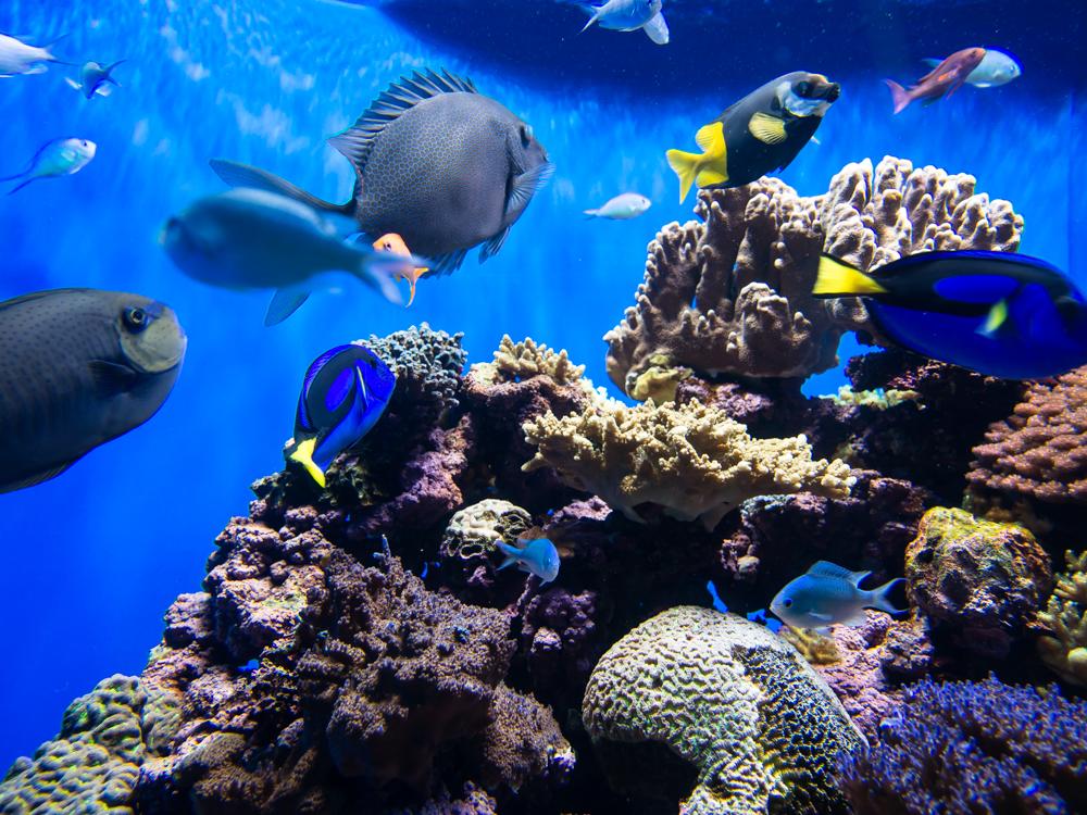 Birch Aquarium At Scripps Institute Of Oceanography 20131212